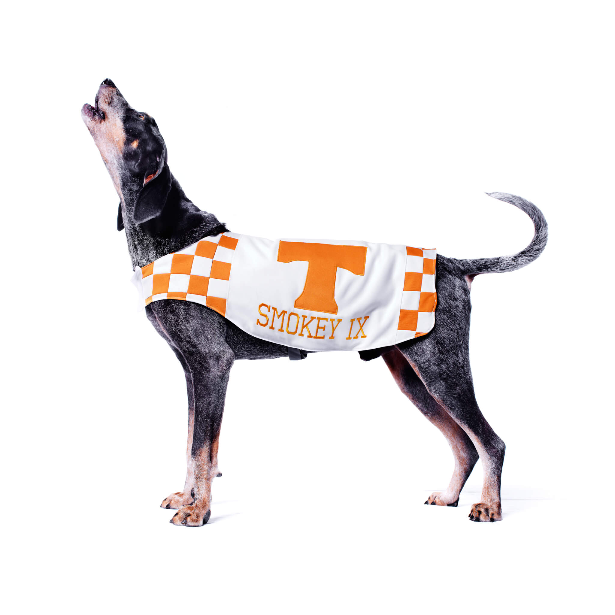 university-of-tennessee-sports-management
